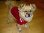 Looking very snazzy in his new sweater, compliments of BHYB